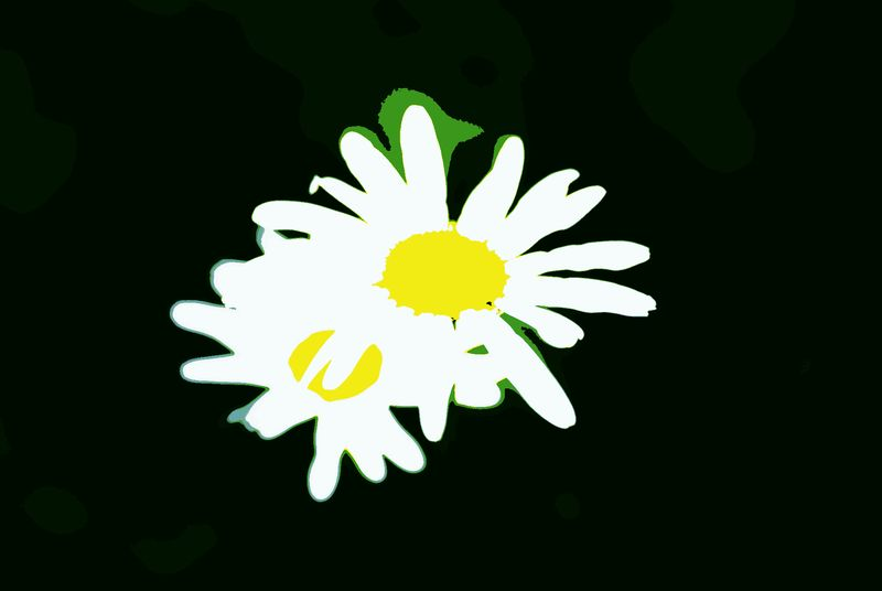 Daisy posterize